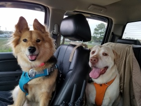Bullet and Kimber being good sports about traveling!